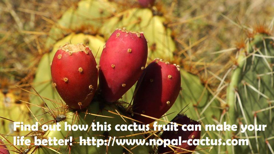 Hetangi Cactus Fruit