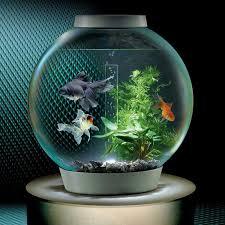 Flower Horn Fish Aquarium