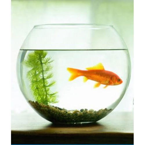 Gift-a-goldfish