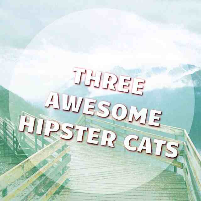 The Three Hipster Cats