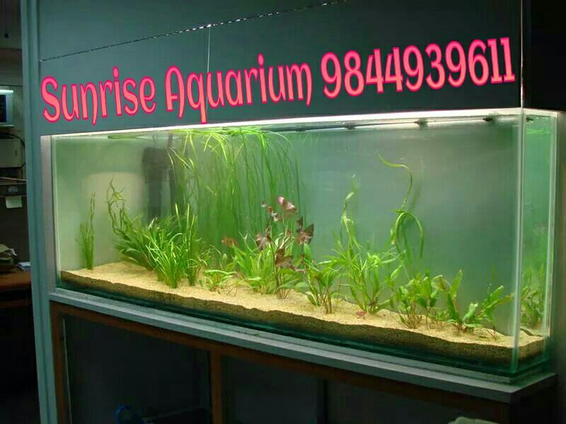 Sunrise Aquarium