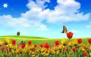 Tulip Lil Garden