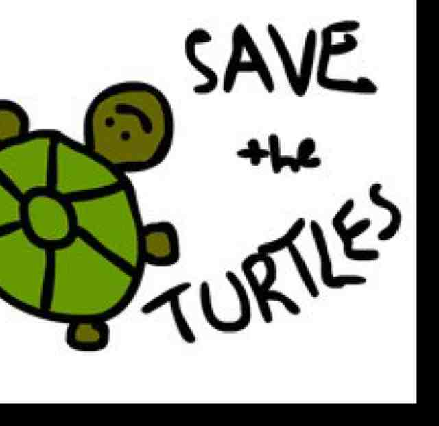 Save The Turtles!