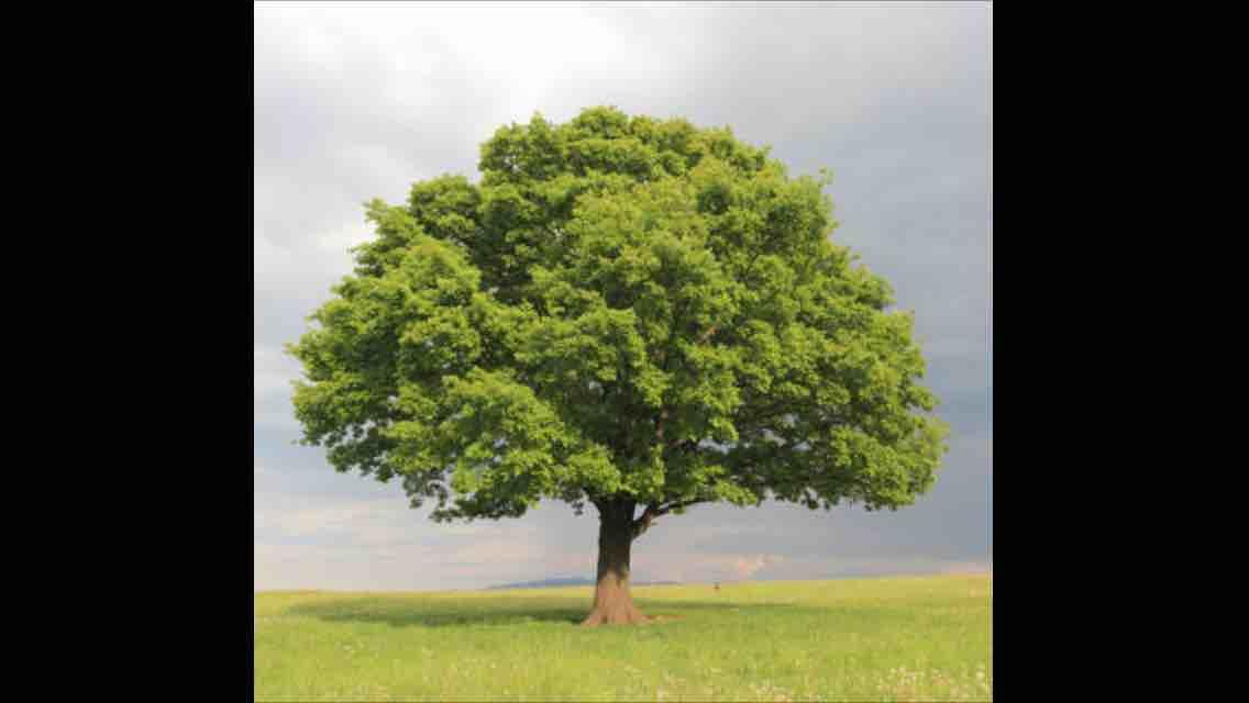 Hopetree