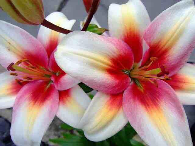 Optimistic Flower