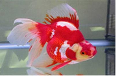 Blue Star Aquarium & Pets
