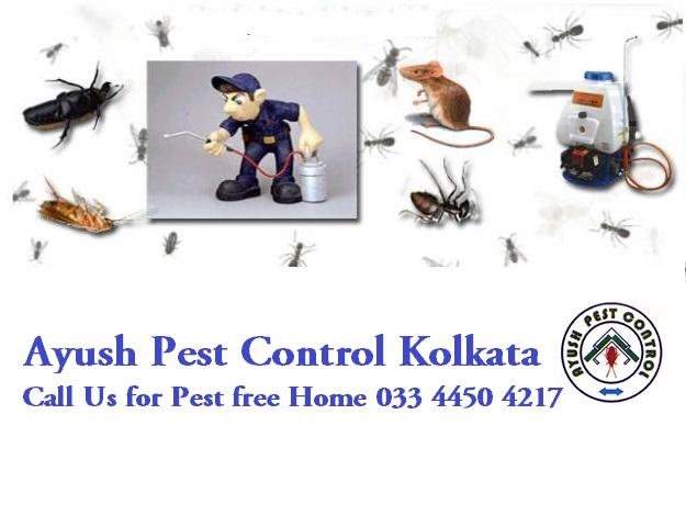Ayush Pest Control