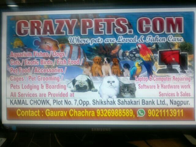 Crazy Pets .Com