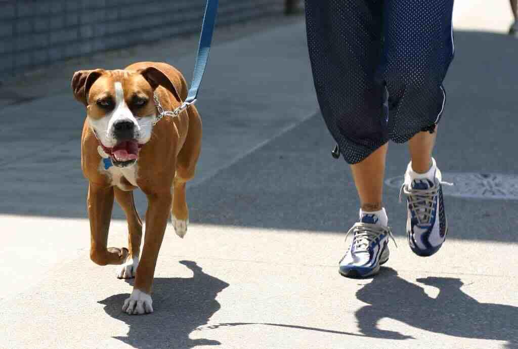 Dog Walking Nation