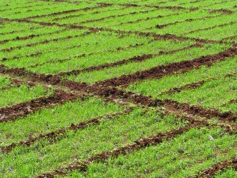 katara agro farms