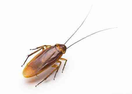 Good Rich Pest Control