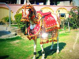 Santram Punjabi Ghodi Baggi