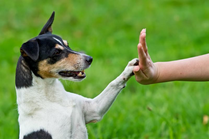 Rajesh Pets Shop | Dog Trainings | Security  | Visakhapatnam