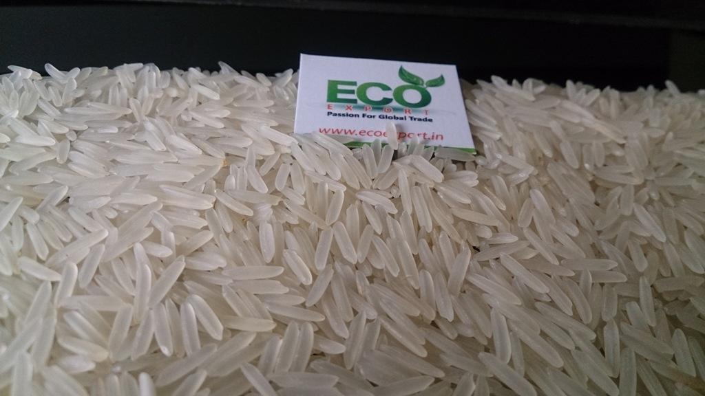 Eco Export India