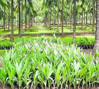 Pollachi Coconut Producer Company Ltd