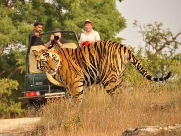 Nature's Quest Tour's & Travels(Kolkata)