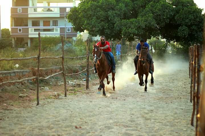 Zippy Horse Riding Academy