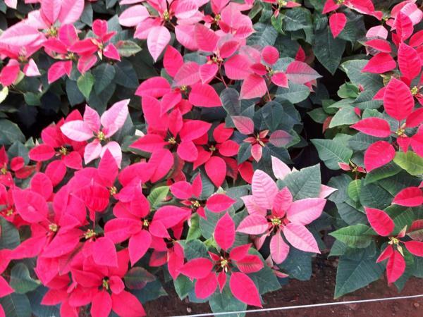www.freshplants.in